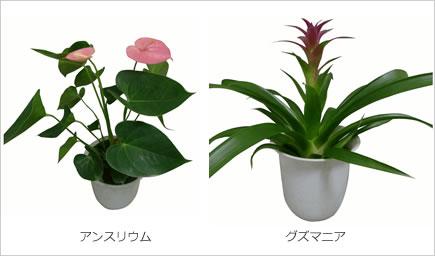 取扱品目:花鉢